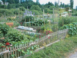 Community Gardens San Diego County